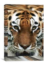 Tiger Abstract, Canvas Print
