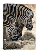 Zebra heads, Canvas Print