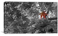 Red Leaf, Canvas Print