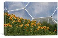 Eden Project Sunflowers, Canvas Print