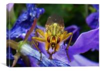 The Dung Fly (Cleg), Canvas Print