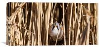Through the Reeds, Canvas Print