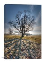 Frosty Start - lone tree, Canvas Print