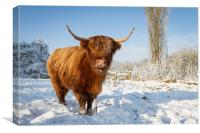 Highland cow in snow, Canvas Print