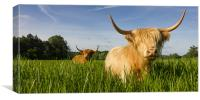 Highland Cattle - Summer, Canvas Print