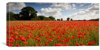 A Poppy or Two, Canvas Print
