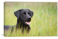 Working Dog - Black Labrador, Canvas Print