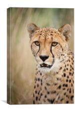 Don't want to - Cheetah, Canvas Print