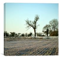 A Frosty Morning in the Chilterns , Canvas Print