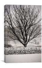 Tree in Snow, Canvas Print