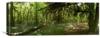 Whippendell Wood at Bluebell Time, Canvas Print