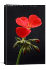 Red Pelargonium, Canvas Print
