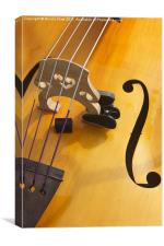 Double Bass, Canvas Print