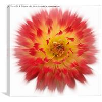 The Power Of Flower, Canvas Print