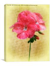 Bloom In Red, Canvas Print
