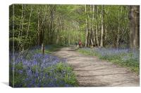 A Walk in the Bluebell Woods, Canvas Print