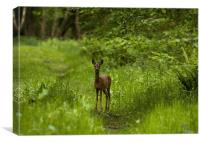 Roe Deer, young, female, Canvas Print