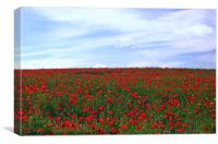 Red Poppy Field.Pembrokeshire., Canvas Print