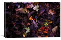 A Berry Among Leaves, Canvas Print