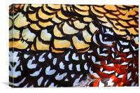 Reeves Pheasant Plumage, Canvas Print