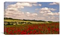 Poppies on the Hill, Canvas Print