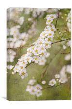 Promise of spring, Canvas Print