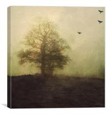 lost in the fog, Canvas Print