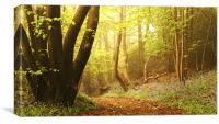 The Bluebell Dell, Canvas Print