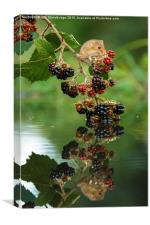 Harvest mouse with brambles reflection, Canvas Print