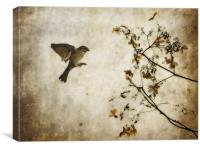 Dead Flowers and Bird, Canvas Print
