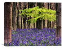 bluebell woodland, Canvas Print