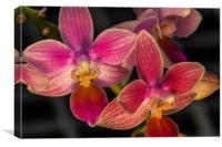 Orchid flowers at Kew gardens, Canvas Print