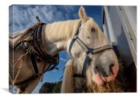 Heavy Ploughing Horse, Canvas Print