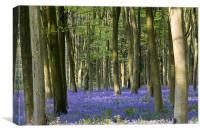 Bluebell woodland carpet., Canvas Print