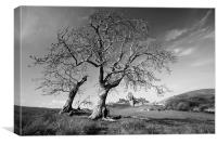 Corfe castle and trees, Canvas Print