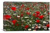 Wildflower Field - red, white and blue, Canvas Print