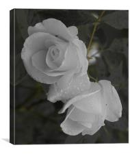 The White Rose, Canvas Print