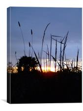 Cheddar Gorge, grasses at Sunset, Canvas Print