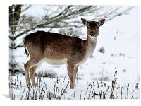 Deer in Wintertime, Canvas Print