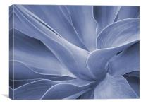 Agave in Blue, Canvas Print