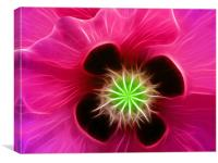 Fushia Poppy, Canvas Print