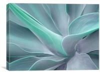 Agave Attenuata Abstract, Canvas Print