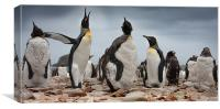 The Penguins at Port Louis, Canvas Print