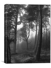 Misty Trees, Canvas Print
