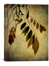 autumn palette, Canvas Print