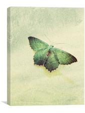common emerald moth, Canvas Print