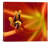 flaming flower, Canvas Print