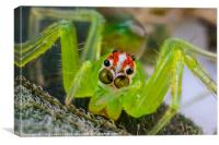 extreme macro of a spiders face, Canvas Print