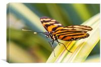 close up of orange tiger butterfly, Canvas Print