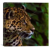 Panther profile, Canvas Print